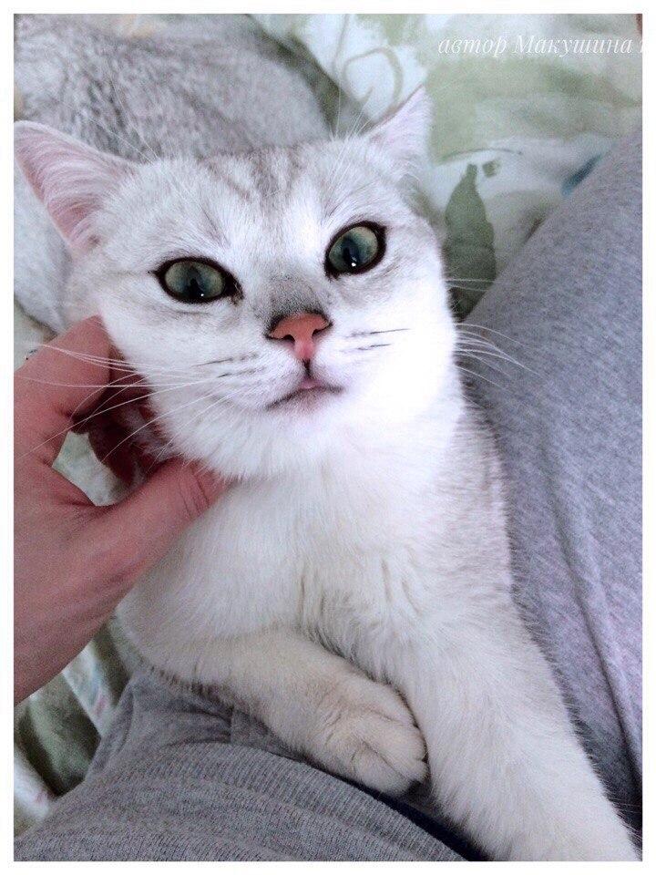 Время, проведенное с кошками, никогда не потрачено впустую.    (с)Зигмунд Фрейд