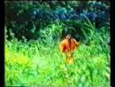 Полет в зеленый ад/ Танец гномов 1983 VHS OPENING Неизвестный Немец