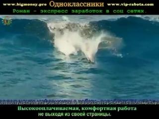 Okean-spaces.ru