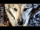 ЗИМОВЬЕ В ТАЙГЕ | охота на дичь, жизнь, баня и тайга, топоры | Primitive Log Cabin in the Forest