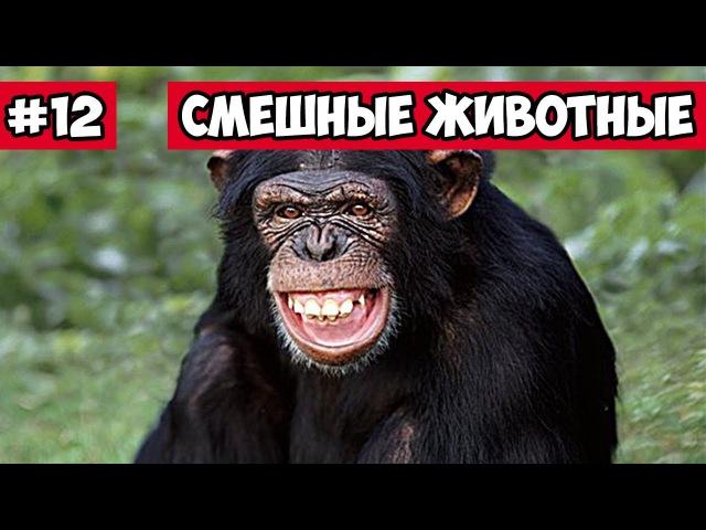 Хохочущая обезьяна, эти смешные животные 12, | Bazuzu Video ТОП подборка май 2017