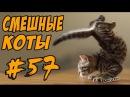 Смешные коты кошки ДО СЛЁЗ Видео Приколы с котами 2017