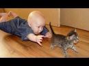 Pisici Amuzante Si Copii Joaca Impreuna - Pisica Drăguț