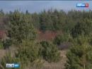 В Каменском районе поймали черных лесорубов