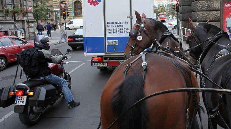 Осторожно, на дороге — лошади!  2yxfFUJMvTo