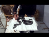 3D Drawing of a Lifelike Snake 3D Painting Optical Illusion!