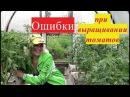 👍 Ошибки при выращивании томатов. Простые рекомендации. 👍