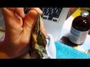 Как делать уколы черепахам на примере красноухой черепахи