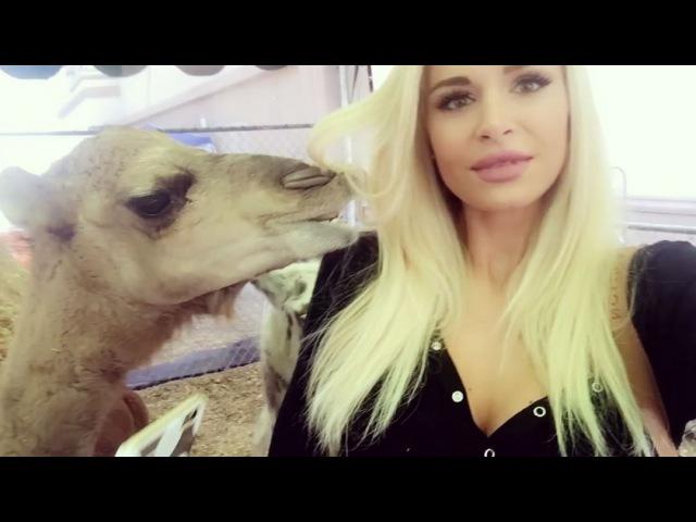 Встреча Анны Катариной (девушка Райана) с ламой (2016)