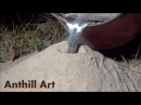 Casting a Fire Ant Colony with Molten Aluminum (Cast 043)
