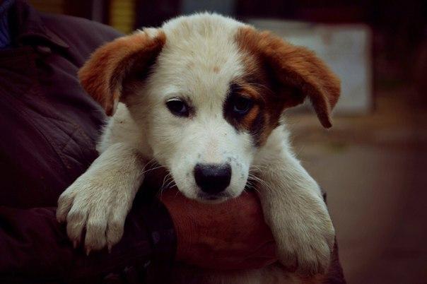 Иваново. SOS🆘🆘🆘катастрофическая ситуация с щенками! Приют Майский День