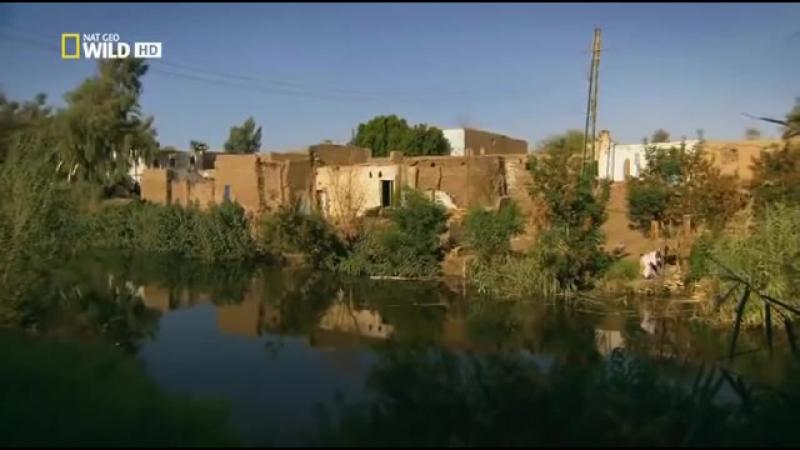 Дикая Африка. Река Нил. Документальный фильм National Geographic