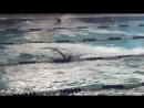 первые соревнования по плаванию