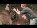 Дикая жизнь с Тимом Фолкнером The Wild Life of Tim Faulkner 2013 26