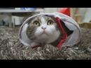 Смешные кошки Приколы КОТ 0080
