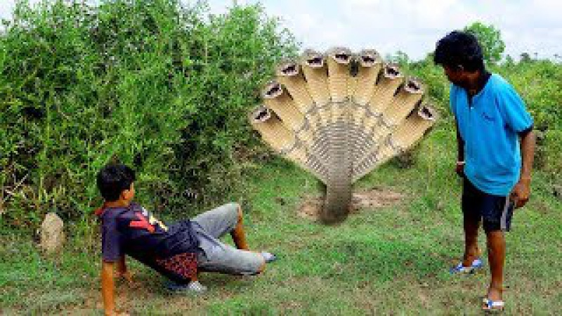 Amazing Smart Boys Catch Snake using Cover Fan and PVC in My Village - Giant Anaconda kills It
