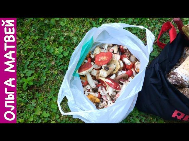 Блогер GConstr в восторге! Сыроежки В Кляре - Вкусно и Просто!   Fried Mushrooms Rec. От Ольги Матвея