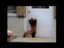 Красная Панда _ Веселая Видео Подборка! Red Panda Funny _