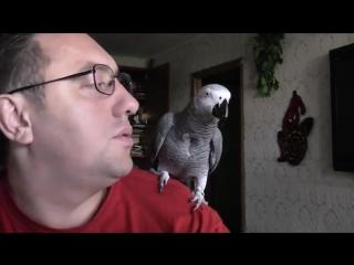Разговорчивый попугай