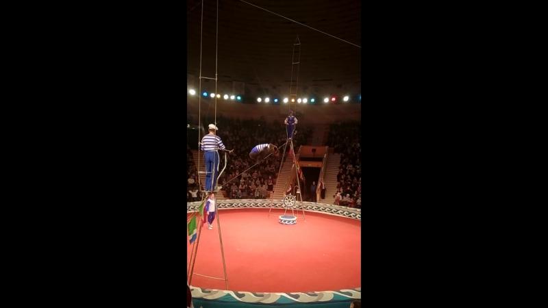 Медведи-канатоходцы в Гомельском цирке