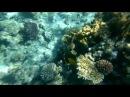 Египет коралловый риф Рас Мухаммед Ras Mohammed 2016