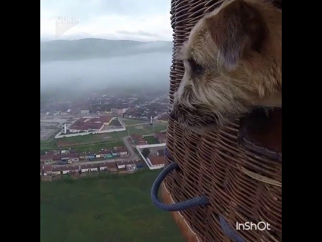If you think dogs can't fly, think again!