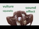 The Animal Sounds: Vulture Squawks - Sounds Effect - Animation