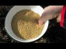 СИДЕРАТЫ СЕЕМ ОСЕНЬЮ и ранней ВЕСНОЙ сидераты горчицу Для плодородия земли SEDERATES