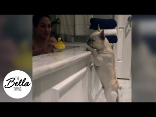 Bella Flashback: Winston joins Nikki in the bath and Winston's first day as a Bella