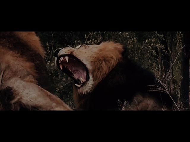 Manuellsen - Der Löwe (prod. Gorex)