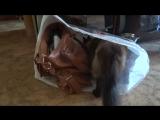 Кот Симба не любит коробки. Но в пакеты заглядывать необходимо!