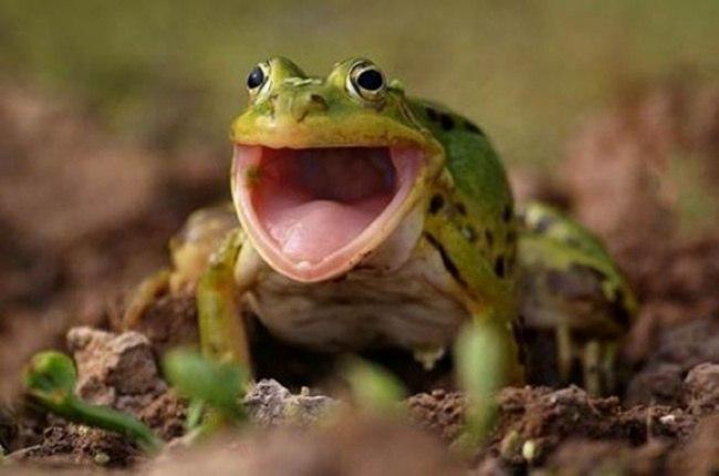 O3nzxtiBWEY - Удивительные фотографии удивленных животных