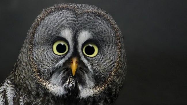 YPQasc0oKDY - Удивительные фотографии удивленных животных