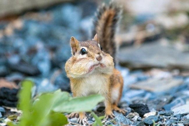 VXPAqmsSYbQ - Удивительные фотографии удивленных животных