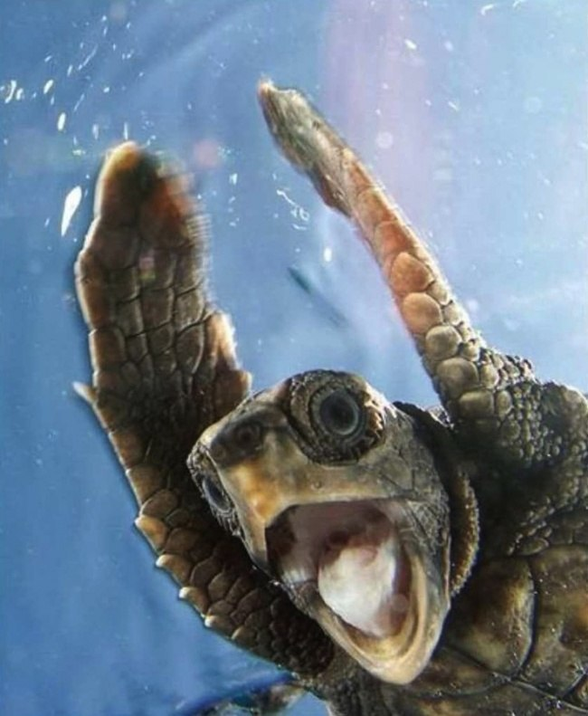 Удивительные фотографии удивленных животных