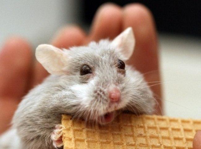 taW3eXcvx7A - Удивительные фотографии удивленных животных