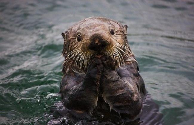 6ZosK2laVOY - Удивительные фотографии удивленных животных