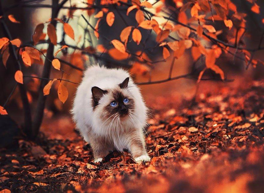 Осень в лесу: умеют ли животные наслаждаться осенью?