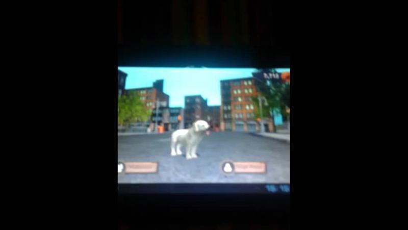 играю в Dog Sim (симулятор собаки)