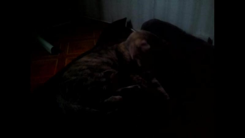 моя кошка моется