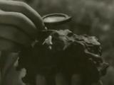 Метеорит Сихоте-Алинь. Документальный фильм, 1956г.