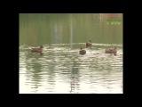 Парк Воронежские озера в новом формате. Местные жители решают, каким емубыть