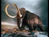 Отчего погибли Мамонты What Killed The Mammoths (2007)