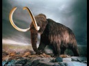Отчего погибли Мамонты? / What Killed The Mammoths? (2007)