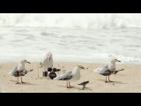 A flock of seagulls singing A Flock of Seagulls #coub, #коуб