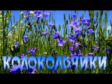КОЛОКОЛЬЧИКИ - НИКОЛАЙ ТЮХАНОВ автор ролика С.Тюнев