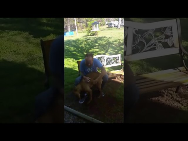 Dog doesn't recognize owner until he sniffs him