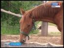 В Кирове состоялся фестиваль конного спорта для людей с ограниченными возможно
