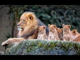Животный мир. Жизнь Лимпопо. Особый путь. Логово зверя. Дикая Африка. Техника охо ...
