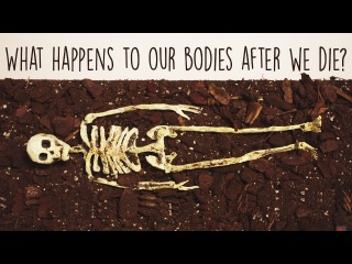 What happens to our bodies after we die? | Farnaz Khatibi Jafari